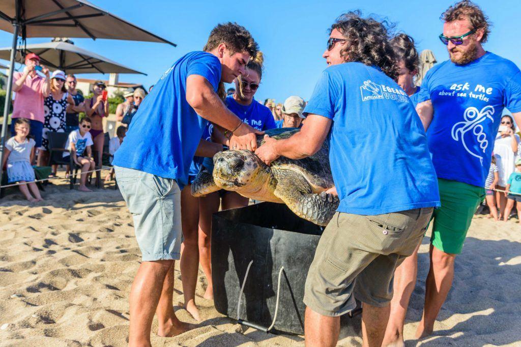 Journey Greece Costa Navarino Sea Turtle Release