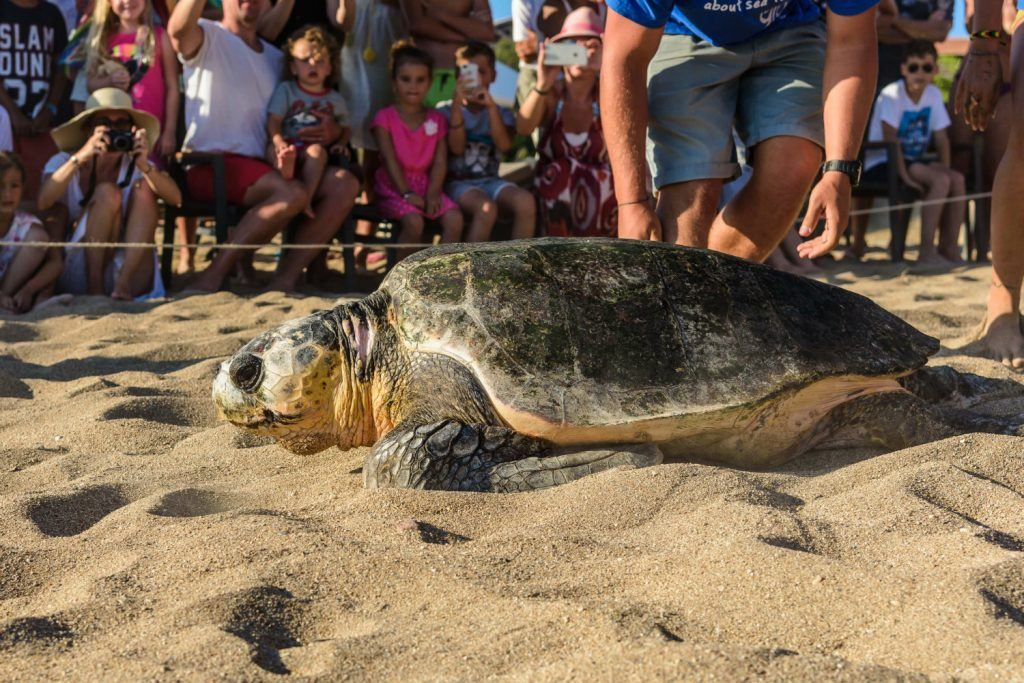 Journey Greece Costa Navarino Sea Turtle Release Westin