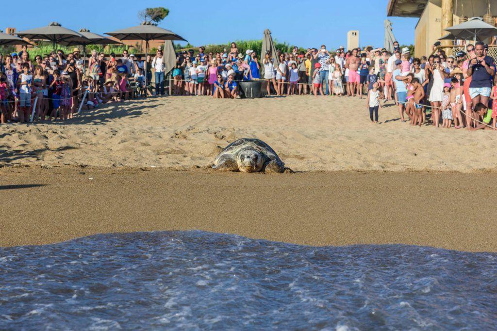 Journey Greece Costa Navarino Sea Turtle Released