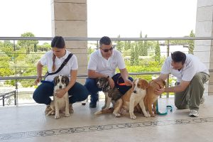 costa navarino pets adoption weekend
