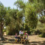 Farm to table experience at romanos costa navarino greece