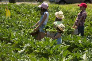 Young Gardeners at The Westin Resort Costa Navarino